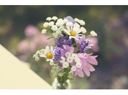 Картинки фото цветы ромашка