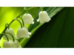 Бесплатно картинки цветы ландыши