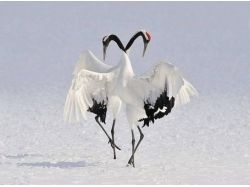 Птицы фото зима