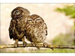 Посмотреть прикольные картинки любовь