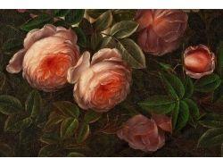 Картинки цветы розы живопись