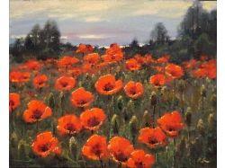 Картинки цветы поле красных маков