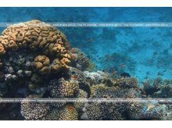 Красное море. подводный мир