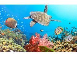 Картинки высокого качества подводный мир