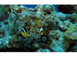 Выставка подводный мир