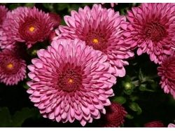 Красивые картинки цветов ландыши