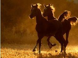 Обои на рабочий лошади