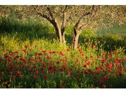 Цветы художественная фотография