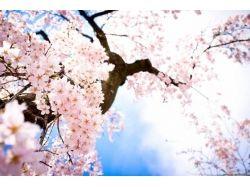Посмотреть красивые картинки природы 5