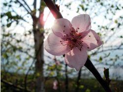 Какой самый красивый комнатный цветок картинки 3