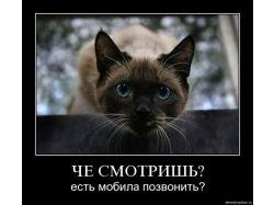Самые красивые картинки с котятами карандашом 2