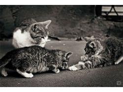 Самые красивые картинки с котятами карандашом 3