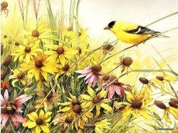 Скрапбукинг картинки птицы 1