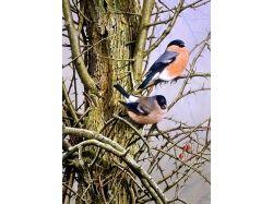 Скрапбукинг картинки птицы 2