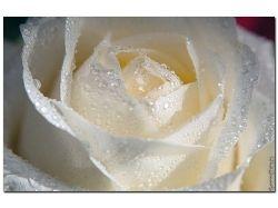 Фото цветов букетов роз