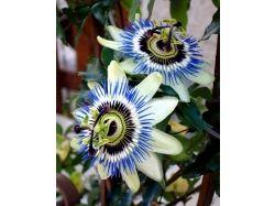 Необычные цветы фото