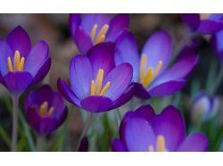 Цветы макро обои 7