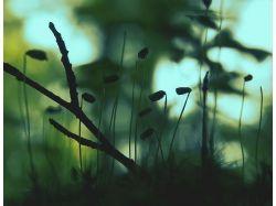 Цветы макро обои 3