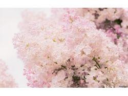 Цветы макро обои 5