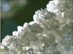 Цветы макро обои 6