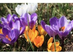 Картинки на рабочий стол красивая весна птицы 3
