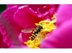 Пчела обои на рабочий стол 1