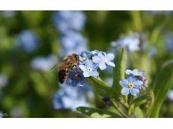 Пчела обои на рабочий стол 4