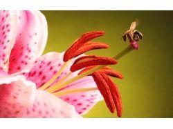 Пчела обои на рабочий стол 5