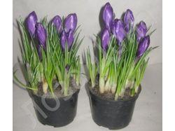 Фото цветы крупным планом