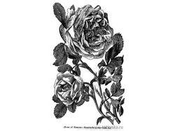 Резьба по дереву рисунки розы 3