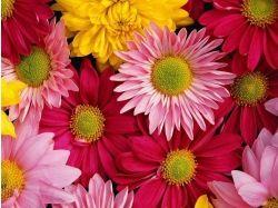 Цветы картинки рабочий стол 1