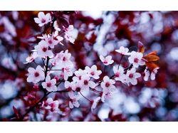Цветы картинки рабочий стол 3