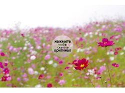 Цветы новые фотографии 1
