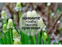 Цветы новые фотографии 2