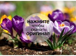 Цветы новые фотографии 3