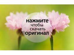 Цветы новые фотографии 5