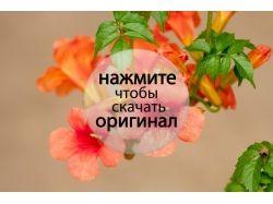 Цветы новые фотографии 6