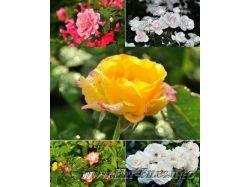 Красивые картинки широкоформатные на рабочий стол цветы 1