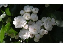 Красивые картинки широкоформатные на рабочий стол цветы 3