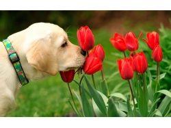 Красивые картинки широкоформатные на рабочий стол цветы 4