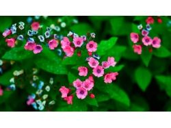Красивые картинки широкоформатные на рабочий стол цветы 5