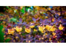 Красивые картинки широкоформатные на рабочий стол цветы 6