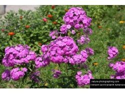 Скачать красивые картинки с изображением цветов на рабочий стол 4