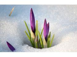 Обои на рабочий цветы на снегу