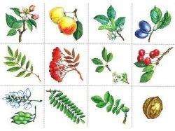 Познавательные картинки для детей деревья