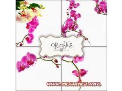 Цветы рисунки на белом фоне