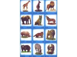 Кто где живет дикие и домашние животные картинки для детей