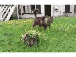 Картинки про котят и щенков