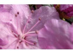 Фотографии цветов букеты