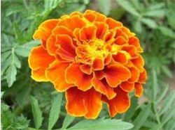 Названия цветов для букетов